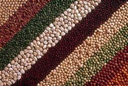 chickpea_diversity_seed